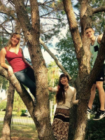 Three Environmental Sustainability Fellows up a tree